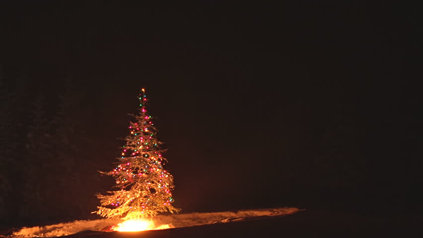 Burning Christmas Tree.Time Lapse Of An Outdoor Christmas Stock Footage Video 100 Royalty Free 3101671 Shutterstock