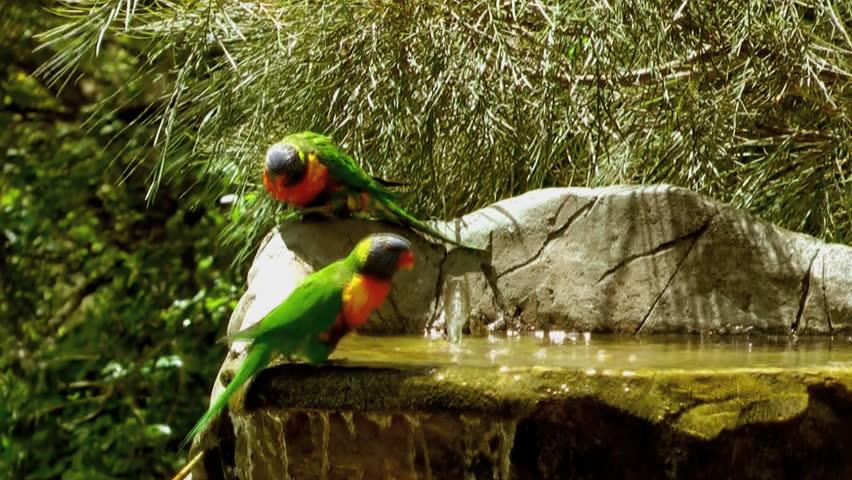 Australia - Birds cooling off under hot Australian sun