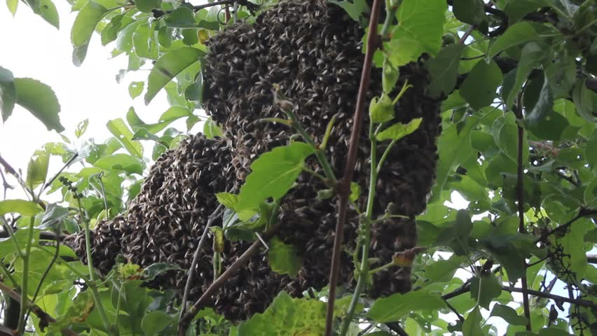 Real Beehive Outside