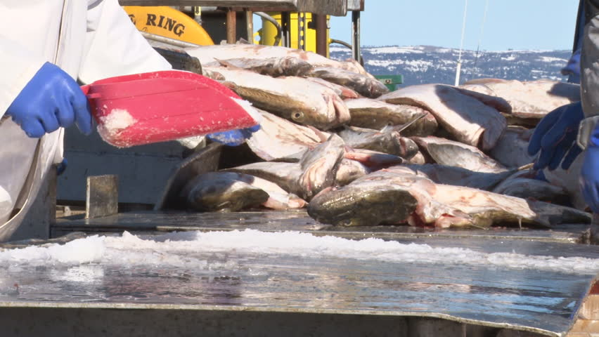 Close-up of the hands and arms, and a little more of the fish-sorting crew as