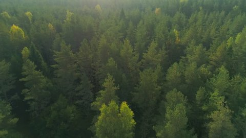 Bird's eye view of beautiful green forest at morning sunrise aerial shot