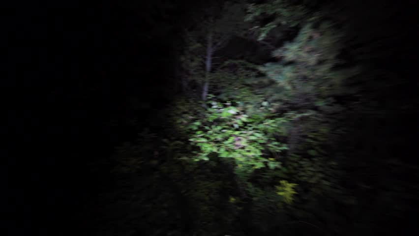 Wandering lost through the woods at night. Lost in the dark with only flashlight to light the way in scary forest on Halloween. Escaping in the bushes in the dead of night. | Shutterstock Video #31362631