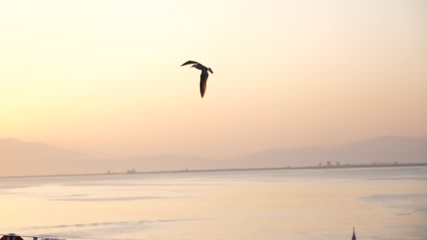 Sea Gull Flying In Sunset Sky Over Ferryboat In Thassos Greece