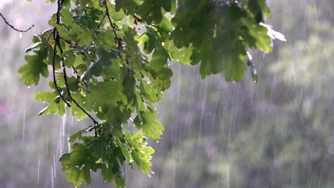 Rain fall in the forest
