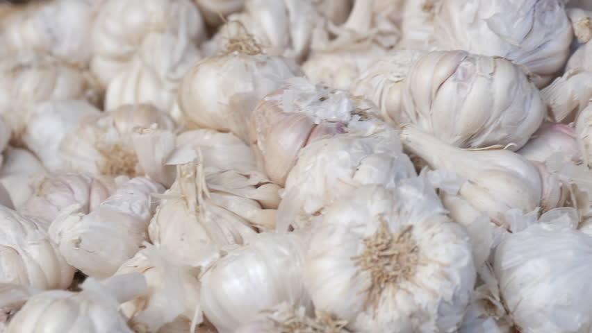 Header of white garlic