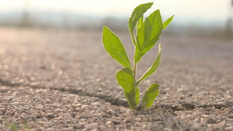 Green plant breaks through the asphalt, as a symbol of perseverance and success.