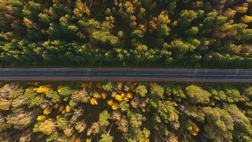 Aerial Flight over the road between fields. Autumn colors. Aerial of green countryside and car driving through. Flying behind and beside a white car driving though green nature with sun shining
