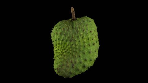 Realistic render of a rotating soursop (graviola) on black background. The video is seamlessly looping, and the 3D object is scanned from a real soursop.