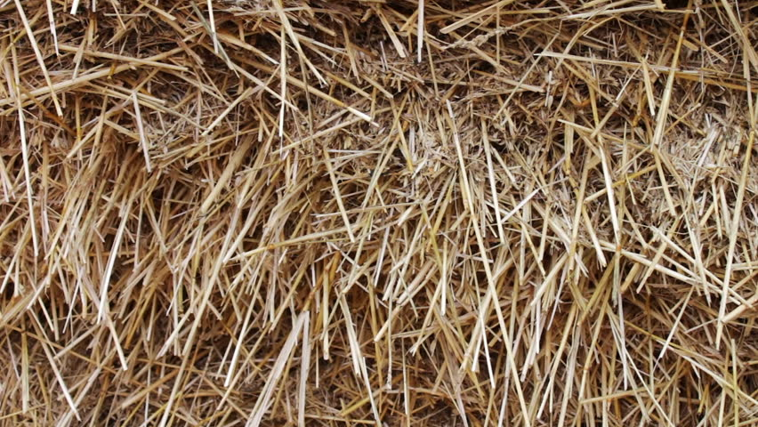 A Form For Farm Animals The WinterA Large Stack Of Hay Or Straw