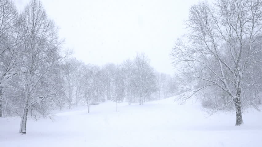 Falling snow in a winter park with snow covered trees, slow motion, filmed at 60p | Shutterstock HD Video #3178861