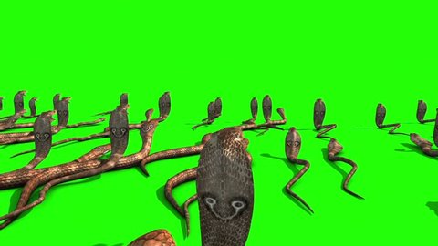 Invasion of Cobra Snakes Group Green Screen Back 3D Rendering Animation