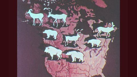 1950s: Globe, map of North America. Land mammals appear on map. Rippling water along hilly forest.