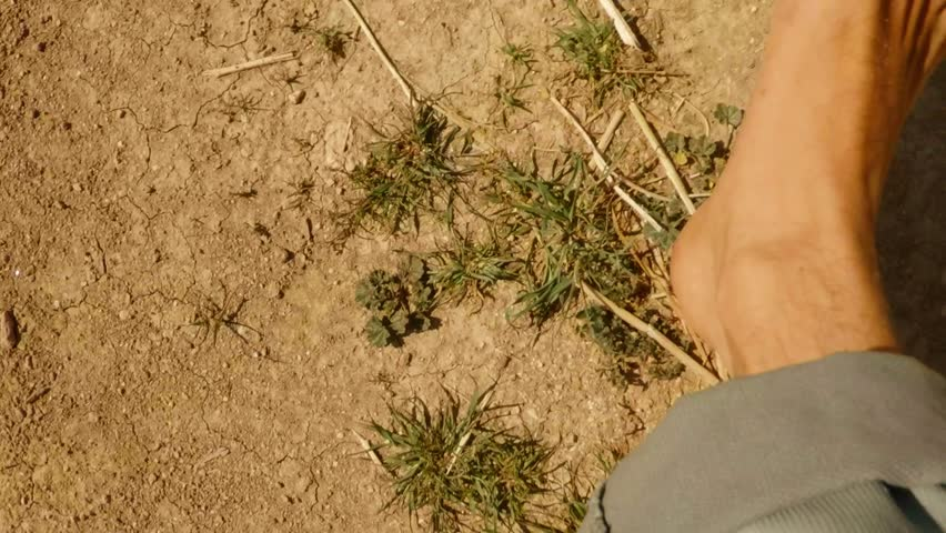Bare feet step on desert land super close-up, rare grass, dry land, top view, slow-motion shooting | Shutterstock HD Video #32307508