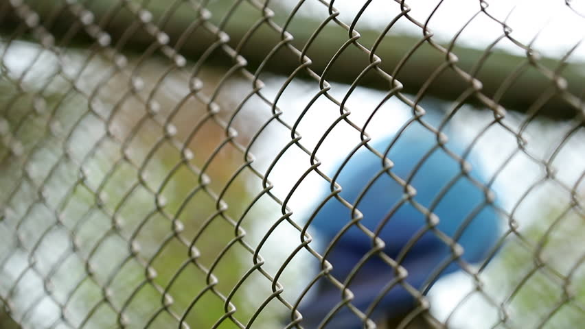 Stock video of cat looks through a grid fencing/cat | 20675401 ...