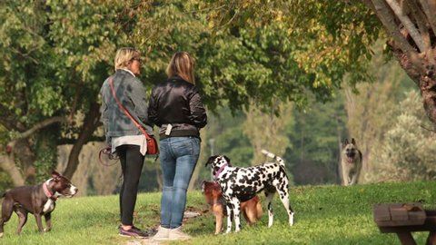 UDINE, ITALY - OCTOBER 12: group of women with dogs, people at he park with pets on October 12, 2017 in Udine