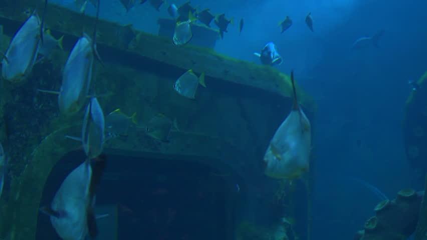 Stock footage underwater shootings shark and fish   Shutterstock HD Video #3237451
