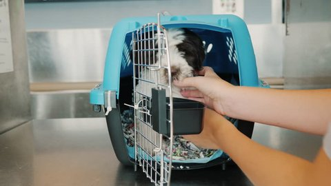 Transportation of dogs by air. A woman puts the puppy in a special cage for living animals