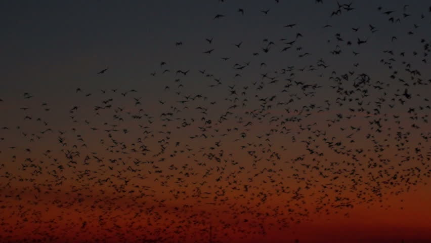 A lot of birds with the energy industry at sunset