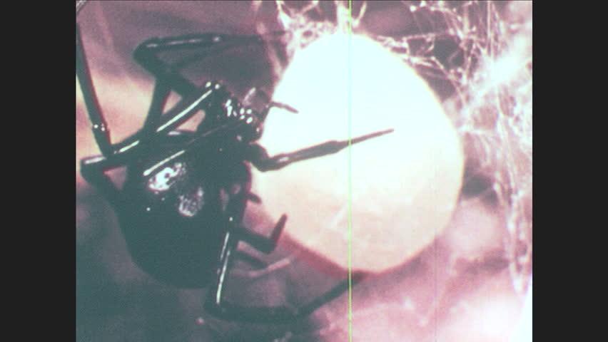 1960s: black widow spider on egg sack  diagram of phylum arthropoda  ants,  cricket  bee  millipede