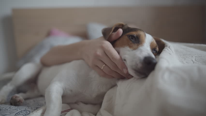 Close-up portrait of happy dog gets pleasure when her master stroked #32551231