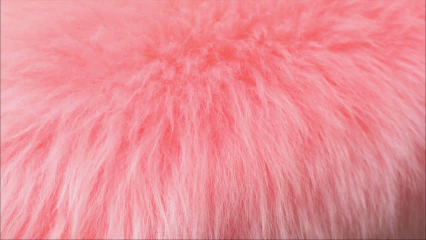 Pink fur background blowing gently in the wind.