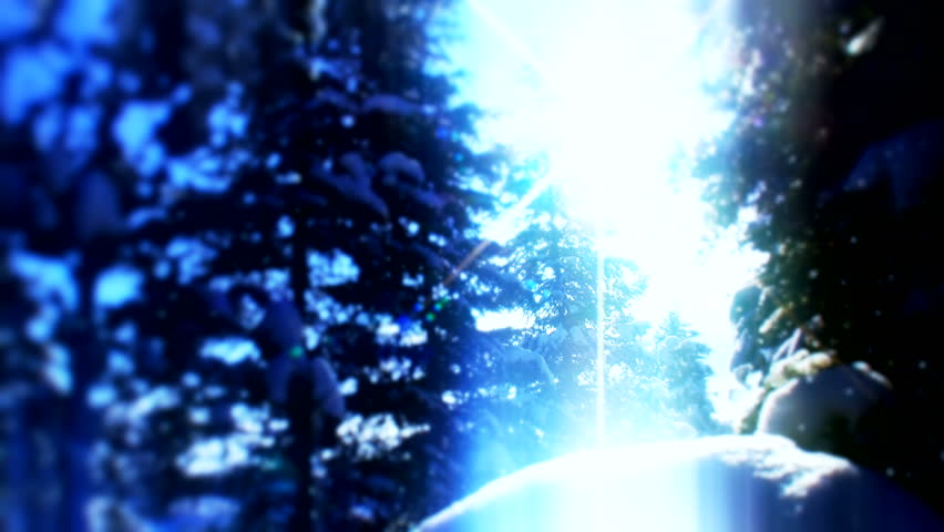 Evening Snow forest  ( Series 5 - Version from 1 to 7 ) | Shutterstock HD Video #3277121