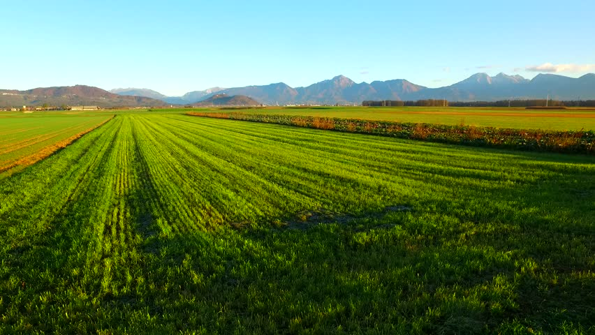 Green fields with young, green, gentle plants of barley. Autumn time. Winter barley. Mountains in the back. | Shutterstock HD Video #32818531