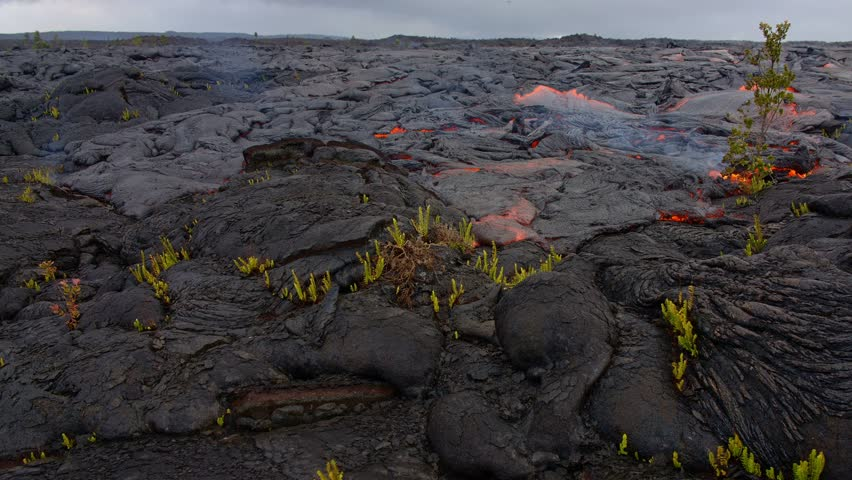 Lava flow over small ferns and plants timelapse Day daytime Glowing Hot flow from Kilauea Active Volcano Puu Oo Vent Active Volcano Magma