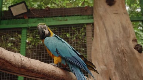 Blue and yellow parrot sitting on tree branch in cage of zoo