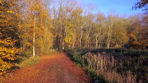small ancient woodland in Essex - aerial drone shoot for Autumn