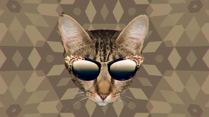 Minimal Motion collage art. Cat and trend sunglasses. Fashion Accessories Concept