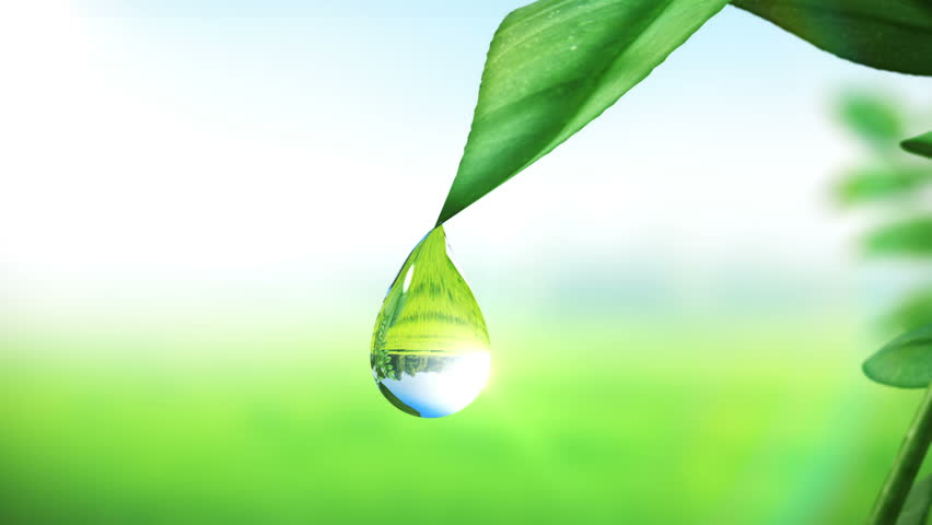 Dewdrop On Leaf Beautiful Animation Stock Footage Video 100 Royalty Free 3294461 Shutterstock