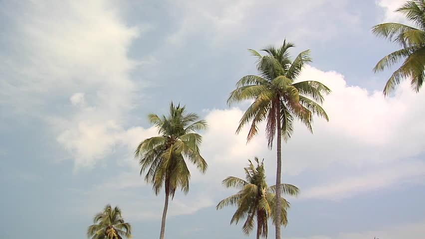 Palm Trees on Ao Loh Da Lam Beach