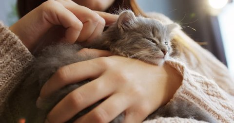 Close up of a cute sleeping kitty-cat in the woman's hands. Woman stroking her lovely little pet. Indoor