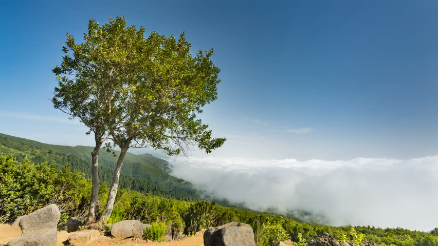 Timelapse sequence of tradewind clouds moving against the mountains of La Palma. Seen from an observation point in the island center with a tree in the foreground in 4K resoultion. | Shutterstock HD Video #33102511