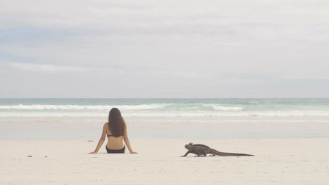 Vacation travel woman relaxing on beach with Marine Iguana walking by on Tortuga bay beach, Santa Cruz Island, Galapagos Islands. Funny travel holidays video, Ecuador, South America.