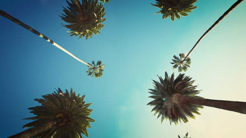 Driving through Beverly Drive. Los Angeles, California. Palm trees against a summer sky. United states. | Shutterstock HD Video #33217051