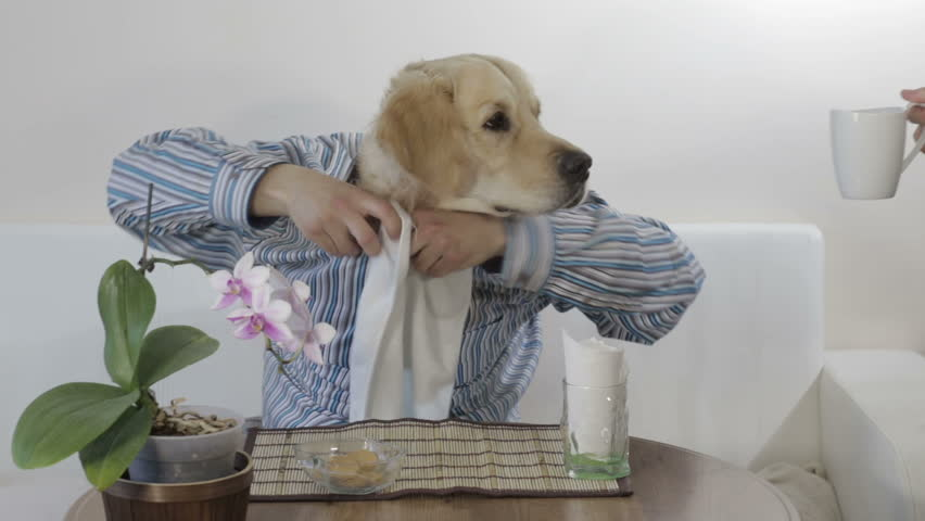 Dogs with human hands