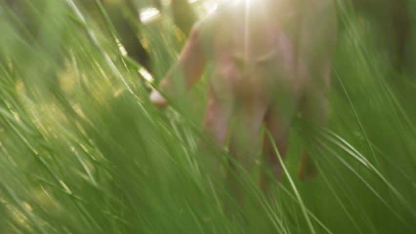 Close-up of hand touching grass in the field at sunset. Man loving nature, living eco-friendly and caring about environment. | Shutterstock HD Video #33645541