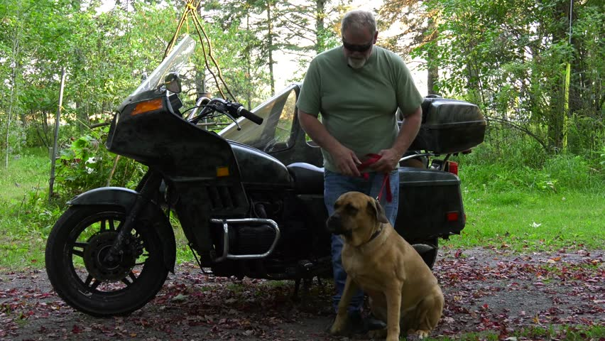 mastiff dog sidecar rider and motorcycle owner getting pet in front of bike 4k