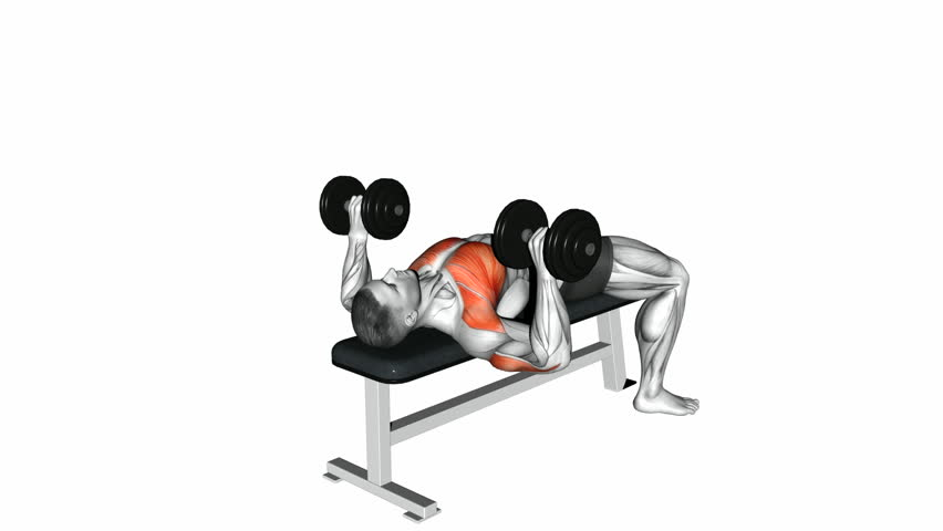 Surprising Dumbbell Bench Press Exercise 3D Stock Footage Video 100 Royalty Free 33735811 Shutterstock Gmtry Best Dining Table And Chair Ideas Images Gmtryco