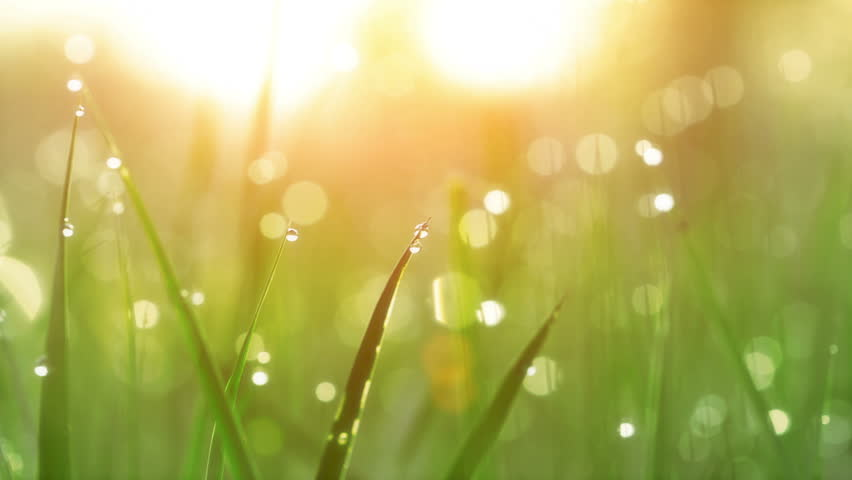 Blurred Grass Background With Water Drops. HD Shot With Motorized Slider.