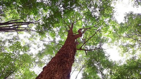 Dolly and low angle shot : The beautiful light and shadow of branches and leaves in the tropical forest.