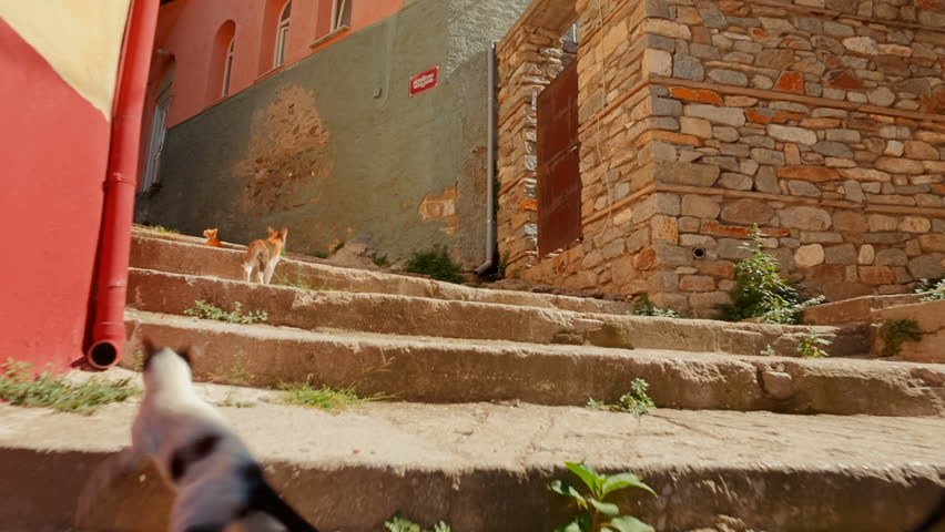 Climbing an old picturesque typical street full of cats in the city of Kavala, Greece. Kavala is the main seaport of eastern Macedonia