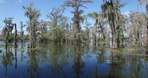 beautiful drone aerial video flying into the Louisiana swamp bayou filming alligators, birds, trees, boats etc