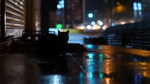 Black cat sitting at dark sidewalk, run away. City traffic, car lights blurred on background. Headlights reflection at wet pavement after rain. Empty area, one animal at darker footpath of road