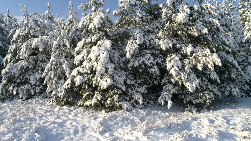 Aerial photography of the winter snow coniferous Christmas forest | Shutterstock HD Video #34181191
