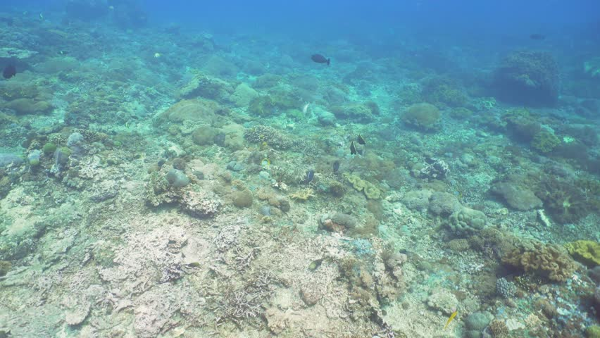 Fish and coral reef. Wonderful and beautiful underwater world with corals and tropical fish. Hard and soft corals. Diving and snorkeling in the tropical sea. Travel concept. 4K video. #34221691
