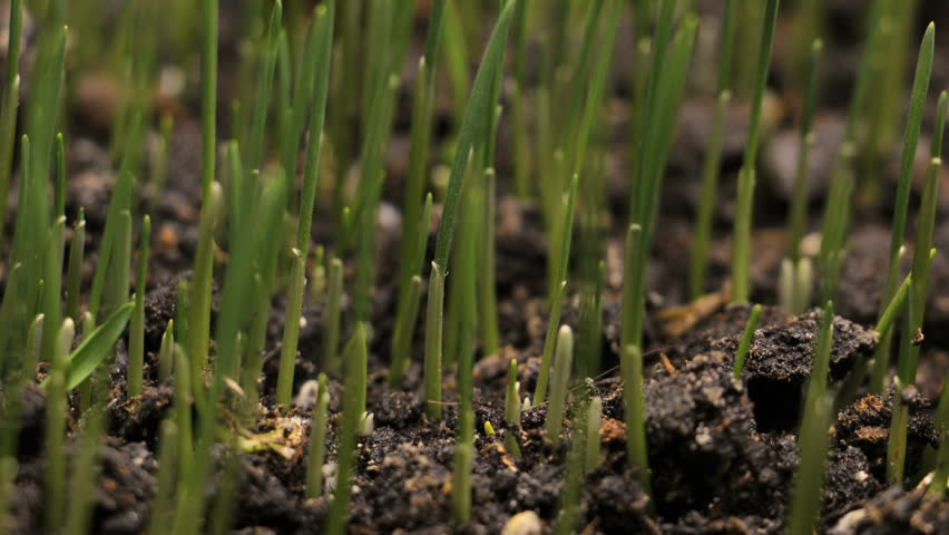 Plant growing from soil time lapse - beginning new life | Shutterstock HD Video #34367161
