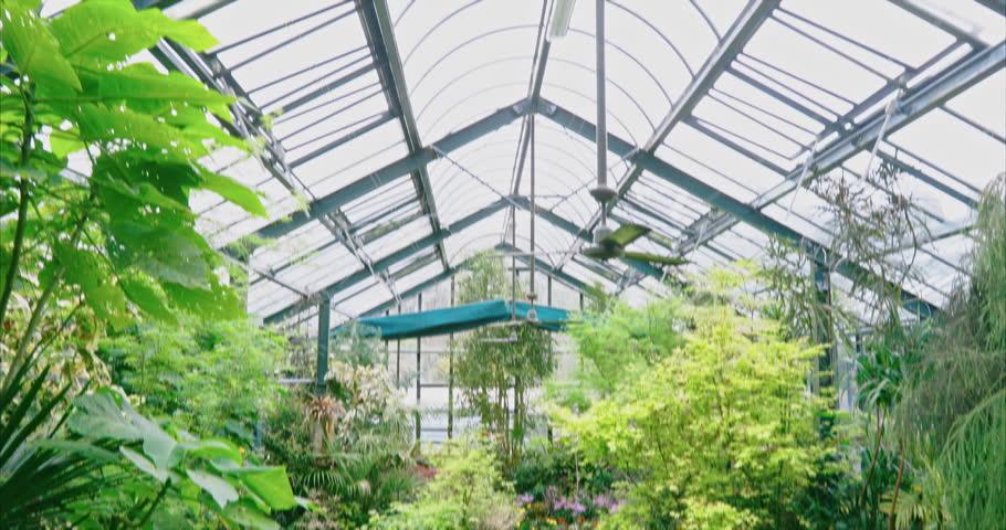 Tropical greenhouse in Pukekura Park, New Plymouth New Zealand | Shutterstock HD Video #34410961